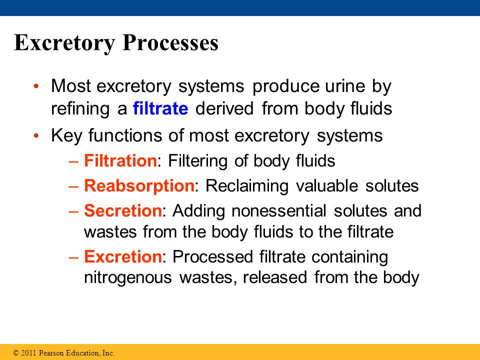 Excretory Processes Most excretory systems produce urine by refining a filtrate derived from body fluids.
