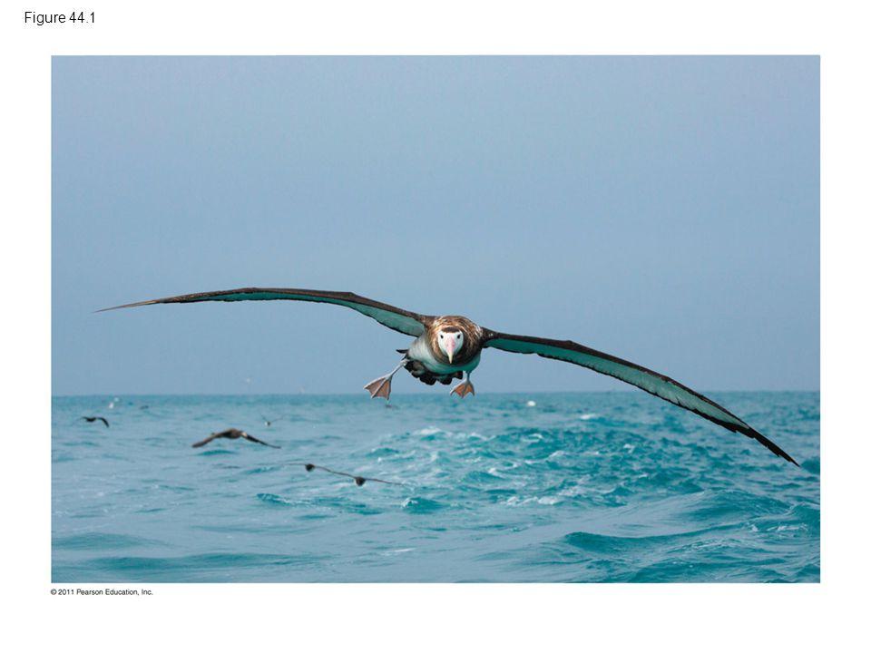 Figure 44.1 Figure 44.1 How does an albatross drink salt water without ill effect
