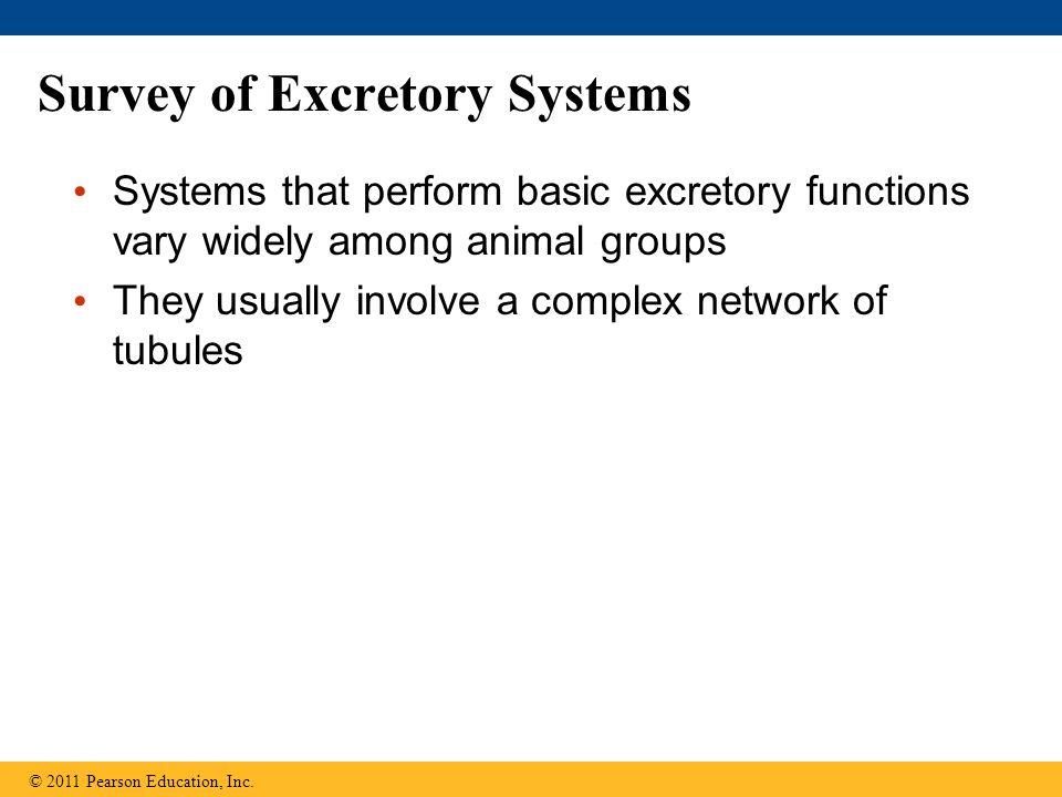Survey of Excretory Systems