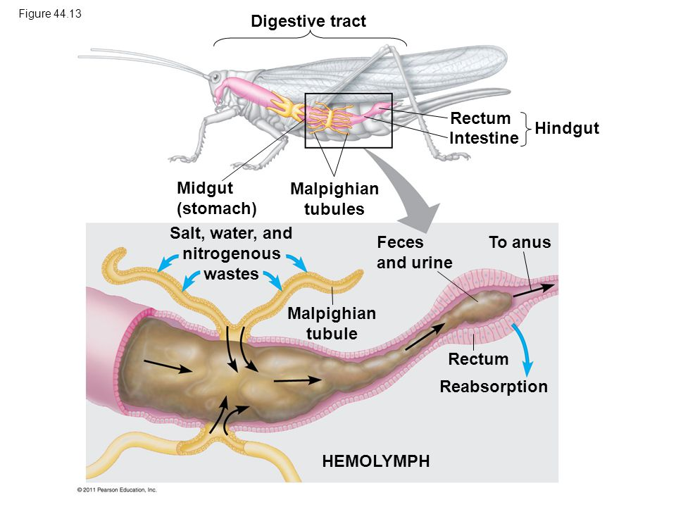 Salt, water, and nitrogenous wastes