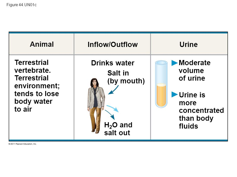 Moderate volume of urine Salt in (by mouth)