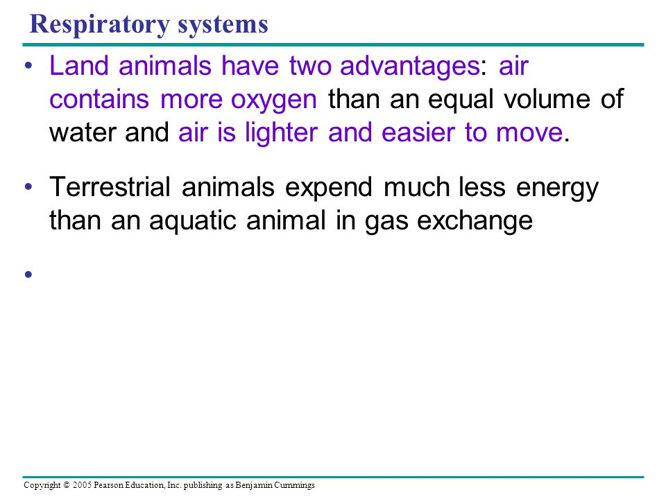 Respiratory systems Land animals have two advantages: air contains more oxygen than an equal volume of water and air is lighter and easier to move.