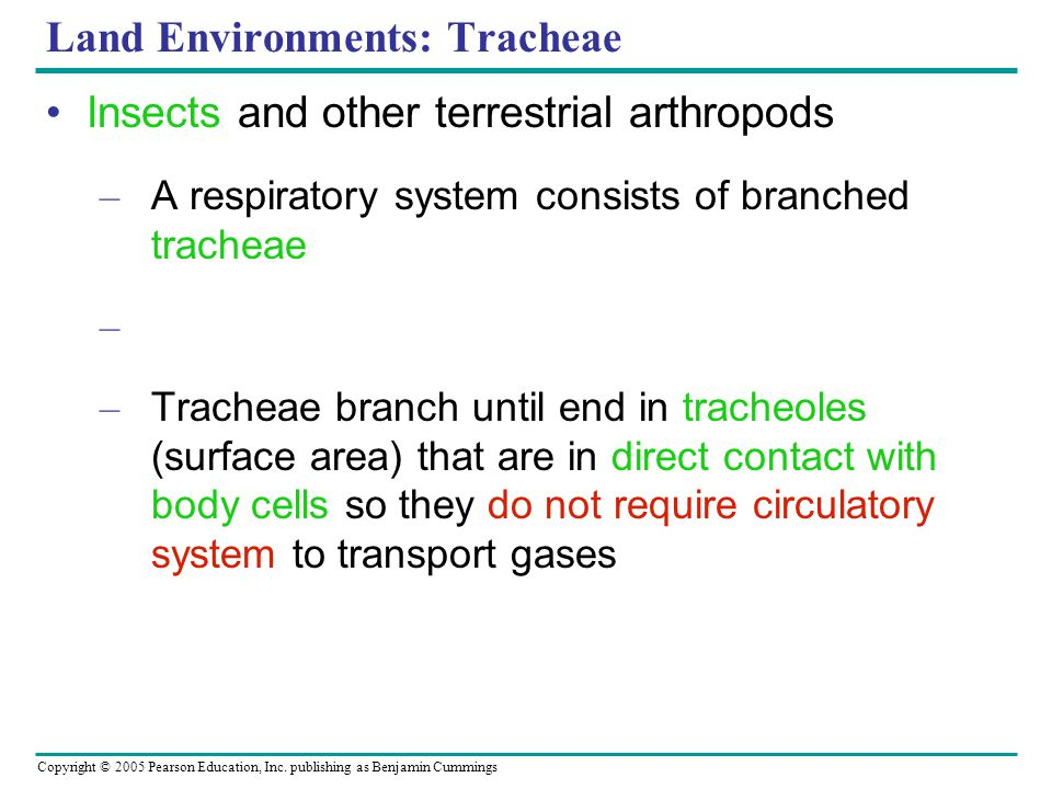 Land Environments: Tracheae