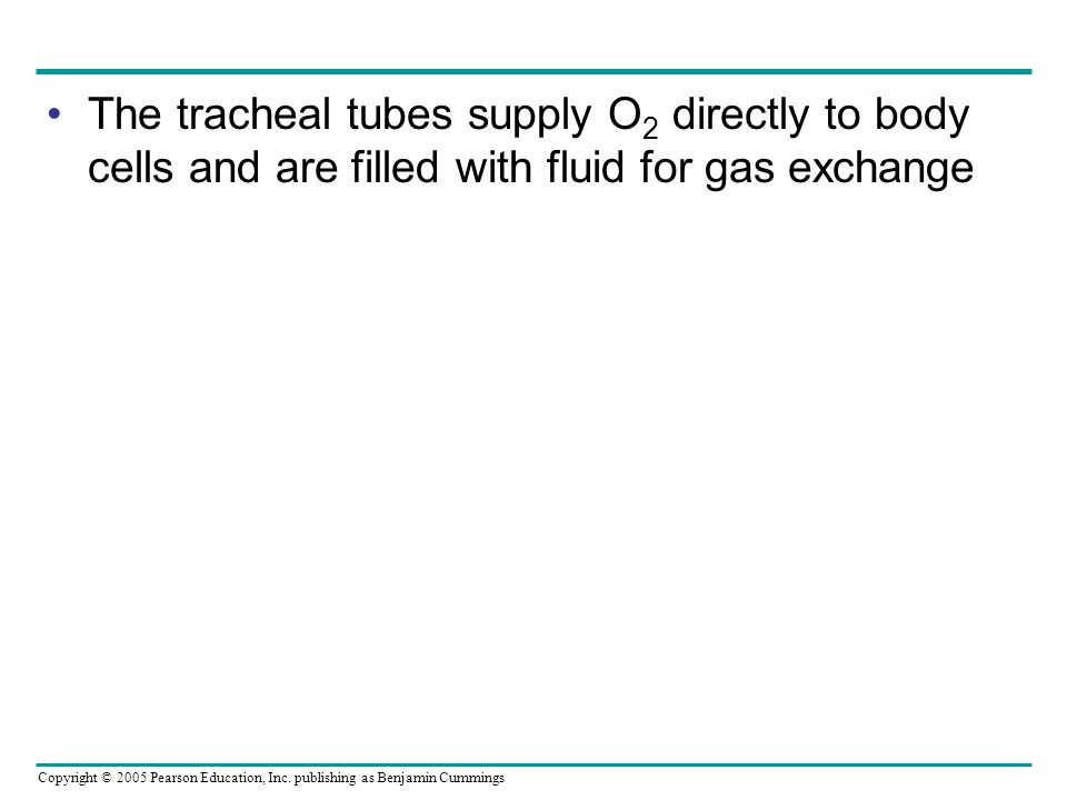 The tracheal tubes supply O2 directly to body cells and are filled with fluid for gas exchange