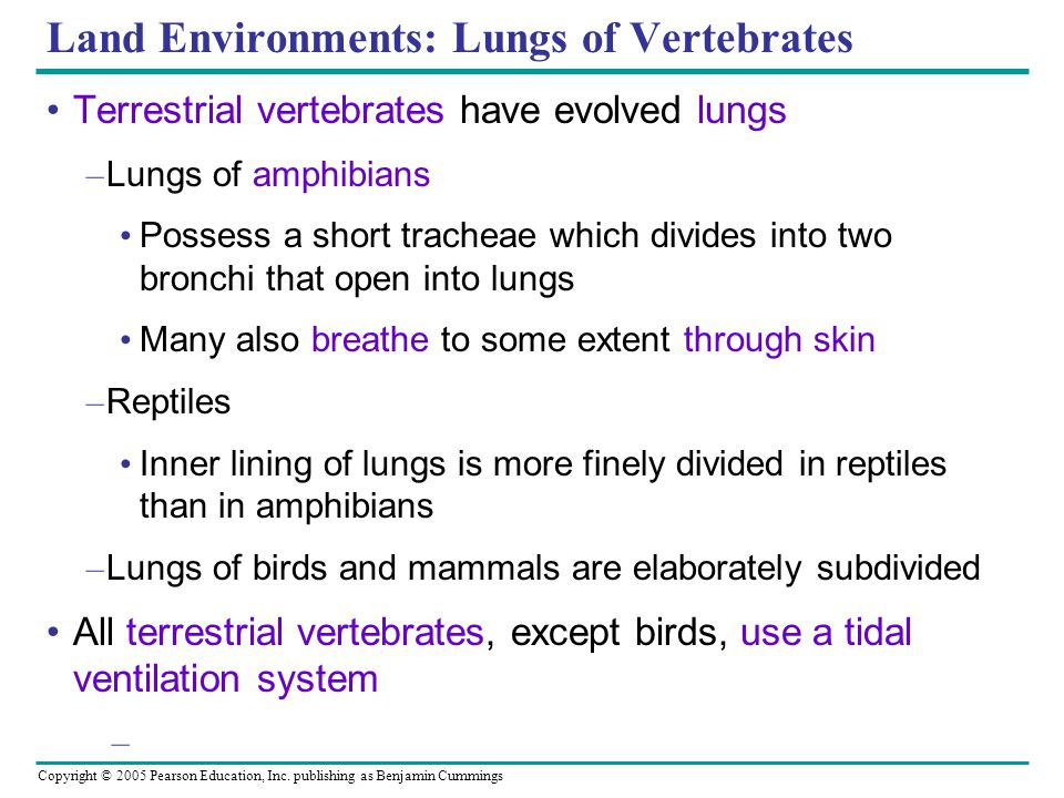 Land Environments: Lungs of Vertebrates