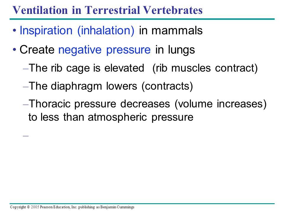 Ventilation in Terrestrial Vertebrates