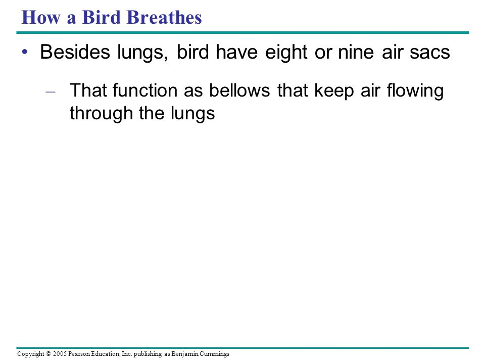Besides lungs, bird have eight or nine air sacs