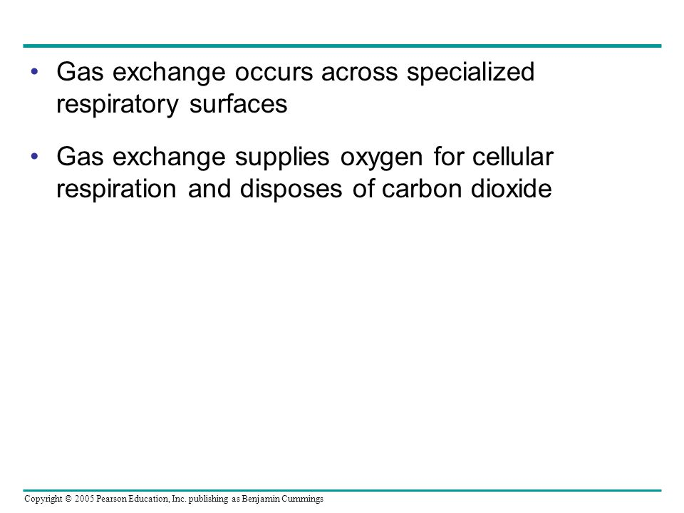 Gas exchange occurs across specialized respiratory surfaces