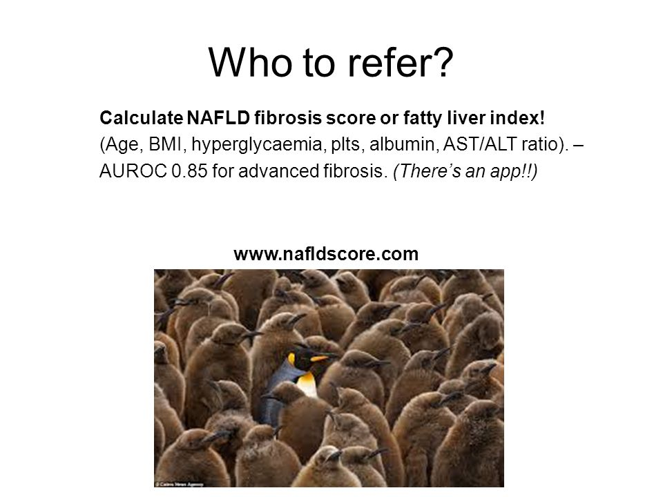 Who to refer Calculate NAFLD fibrosis score or fatty liver index!