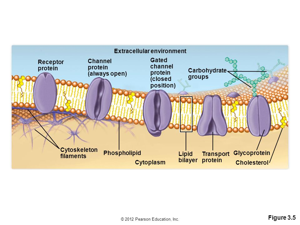 Extracellular environment