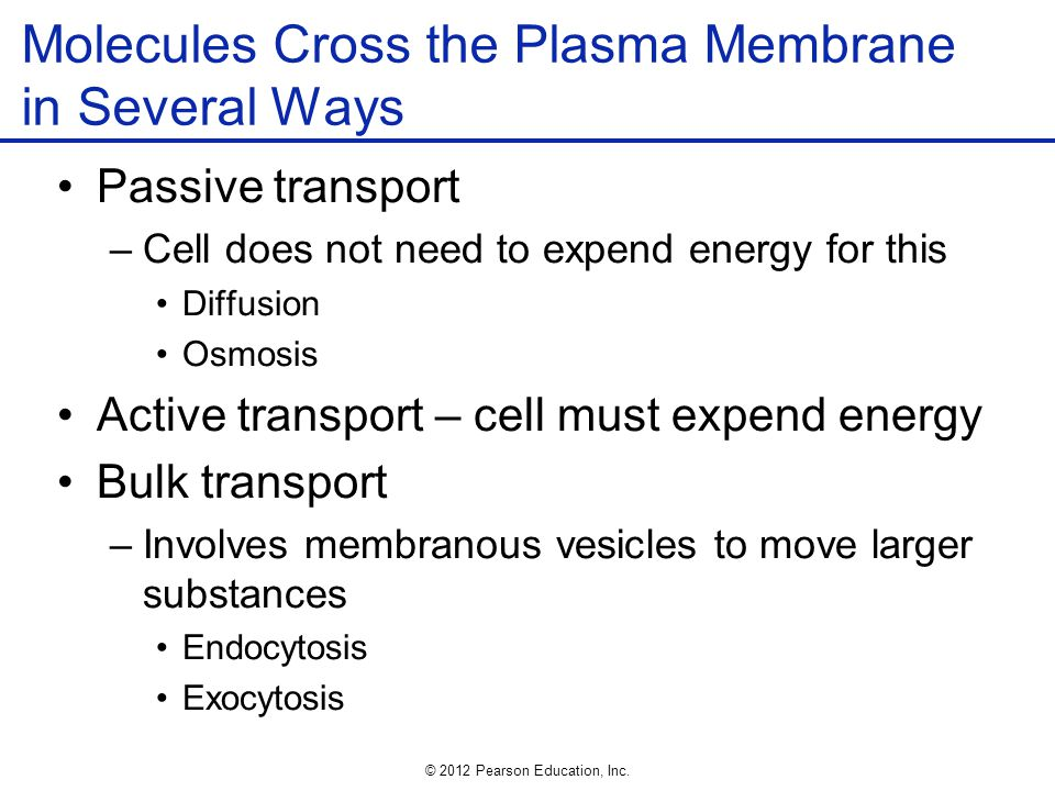 Molecules Cross the Plasma Membrane in Several Ways
