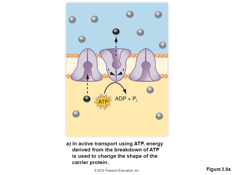 a) In active transport using ATP, energy