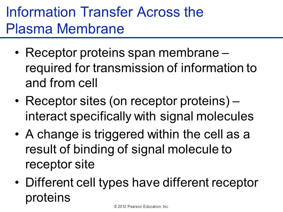 Information Transfer Across the Plasma Membrane