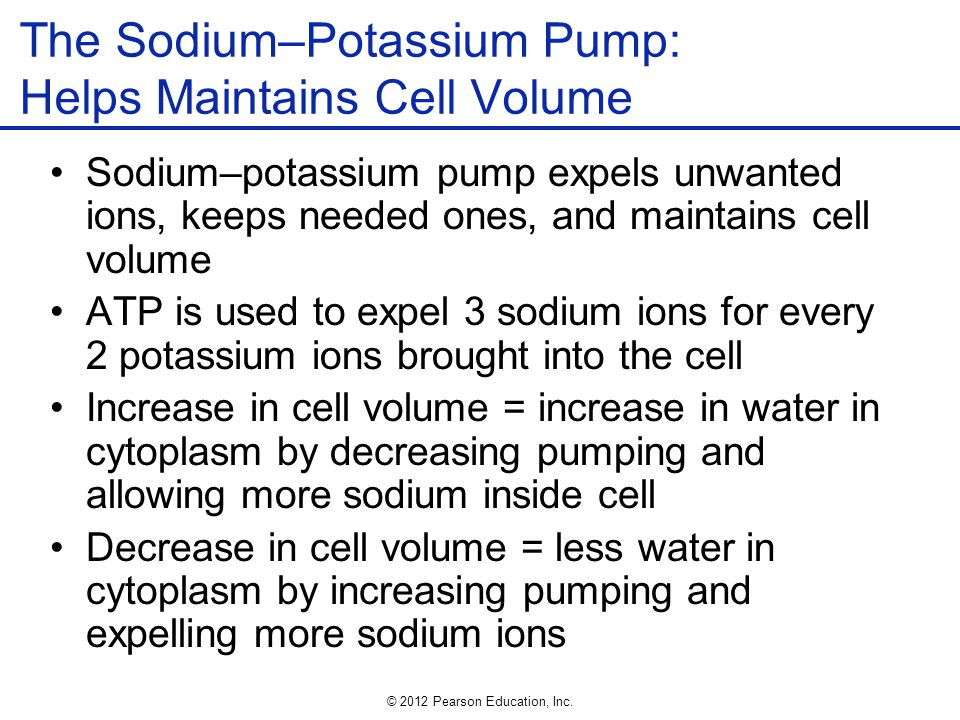 The Sodium–Potassium Pump: Helps Maintains Cell Volume