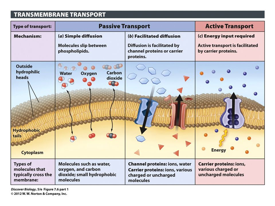 Figure 7.6 (part 1) The Plasma Membrane Controls What Enters and Leaves the Cell