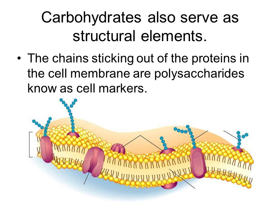 Carbohydrates also serve as structural elements.