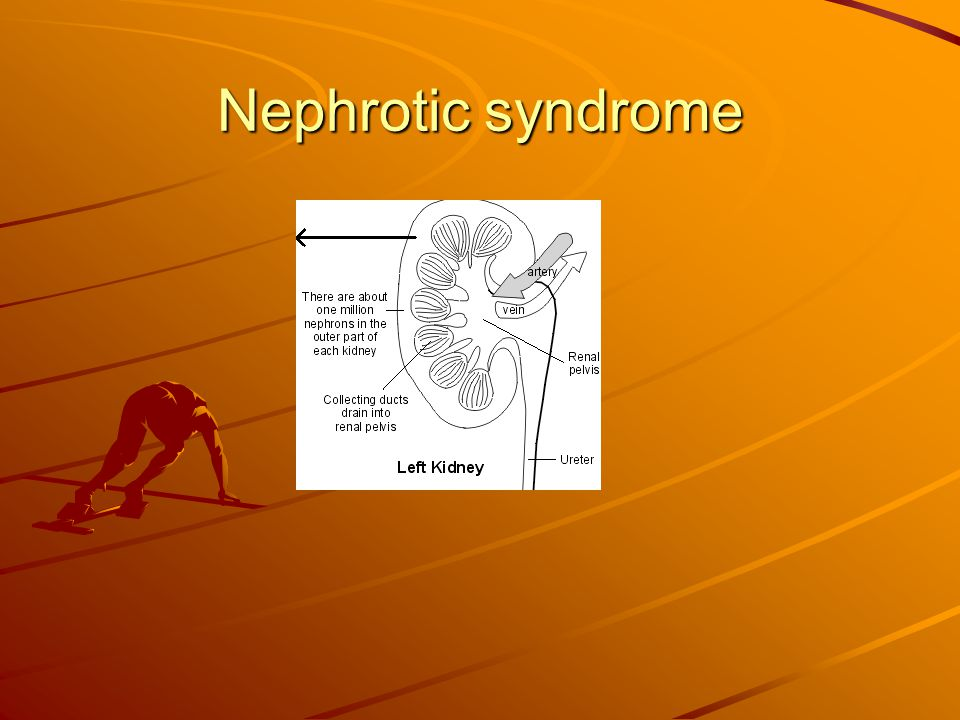 Nephrotic syndrome Understanding kidneys and urine. The kidnesy lie to the sides of the upper abd., behind the intestines and are bean-shaped.