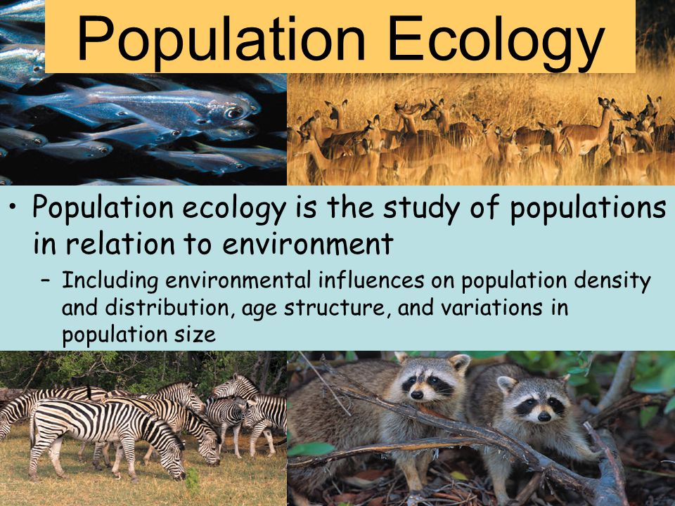 Population Ecology Population ecology is the study of populations in relation to environment.