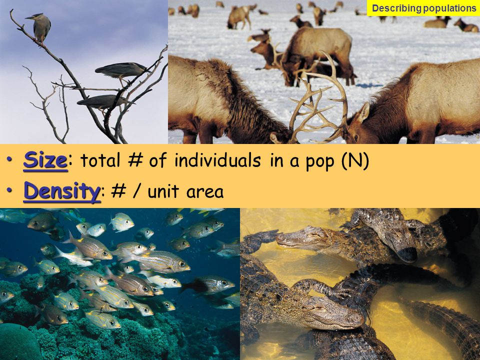 Size: total # of individuals in a pop (N) Density: # / unit area