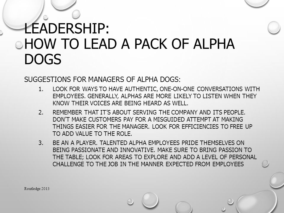 Leadership: How to Lead a Pack of Alpha Dogs