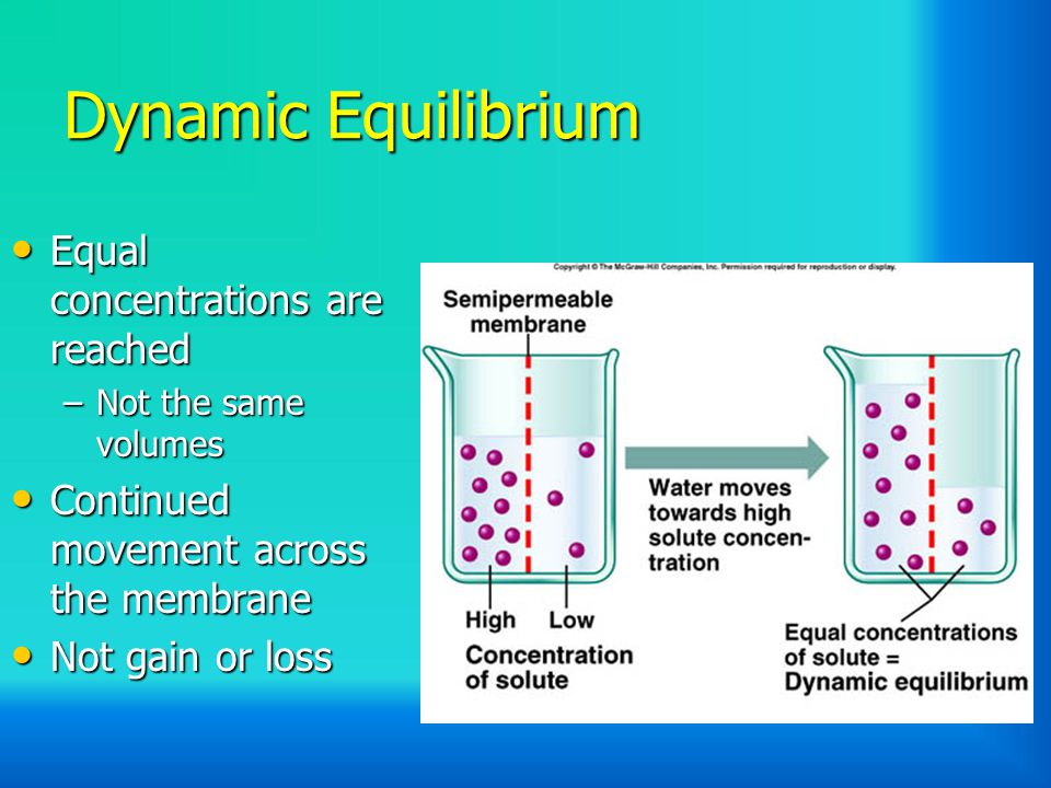 Dynamic Equilibrium Equal concentrations are reached