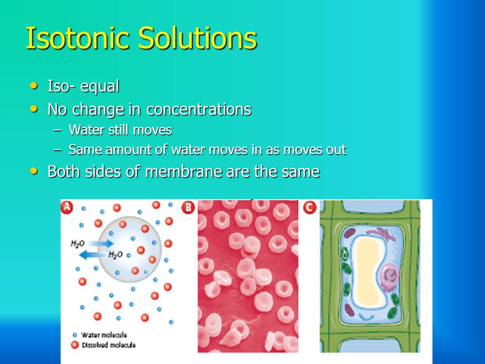 Isotonic Solutions Iso- equal No change in concentrations