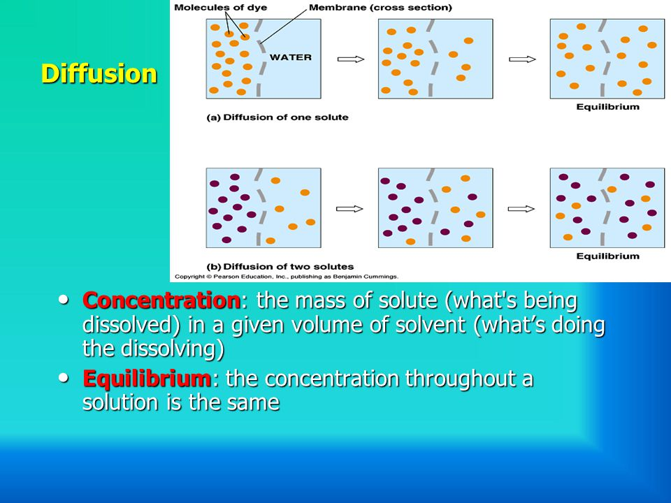 Diffusion Concentration: the mass of solute (what s being dissolved) in a given volume of solvent (what's doing the dissolving)