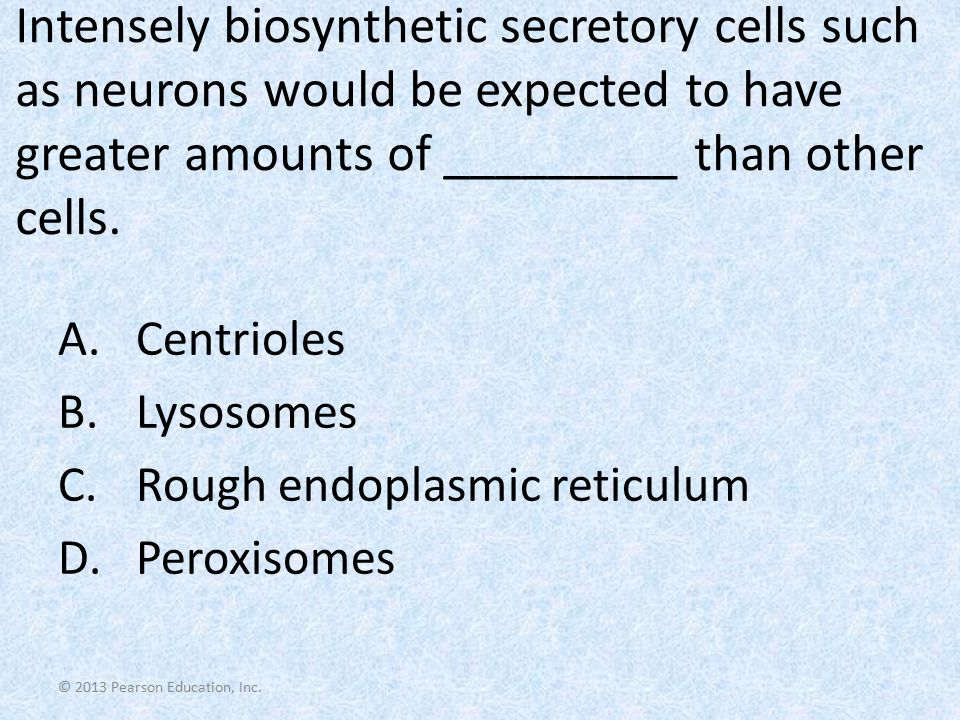 Intensely biosynthetic secretory cells such as neurons would be expected to have greater amounts of _________ than other cells.