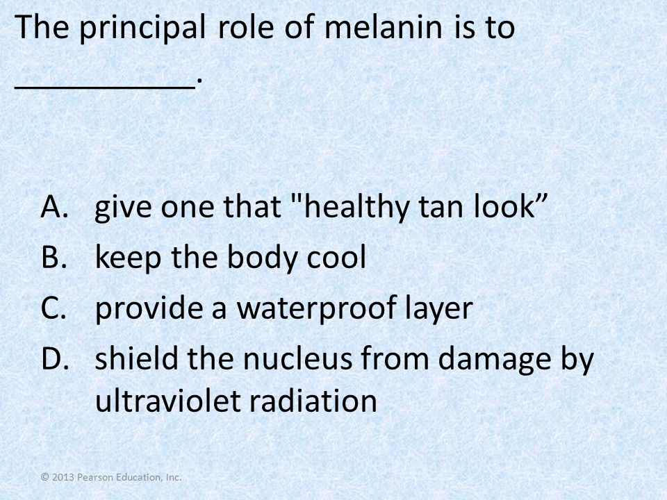 The principal role of melanin is to __________.