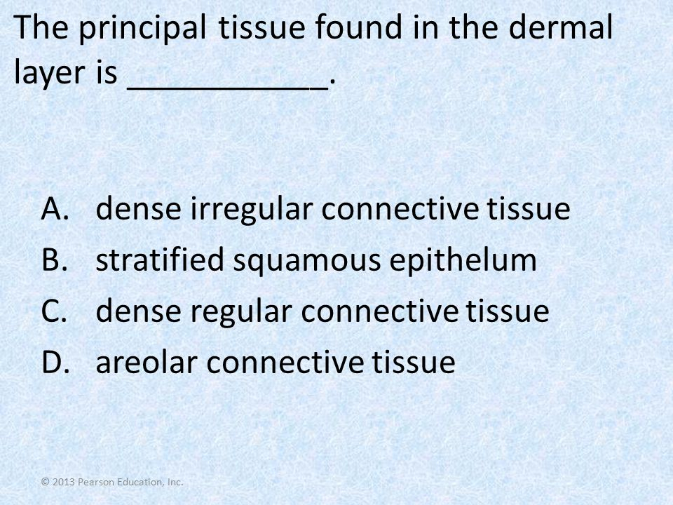 The principal tissue found in the dermal layer is ___________.