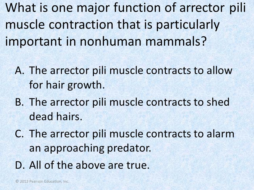 What is one major function of arrector pili muscle contraction that is particularly important in nonhuman mammals