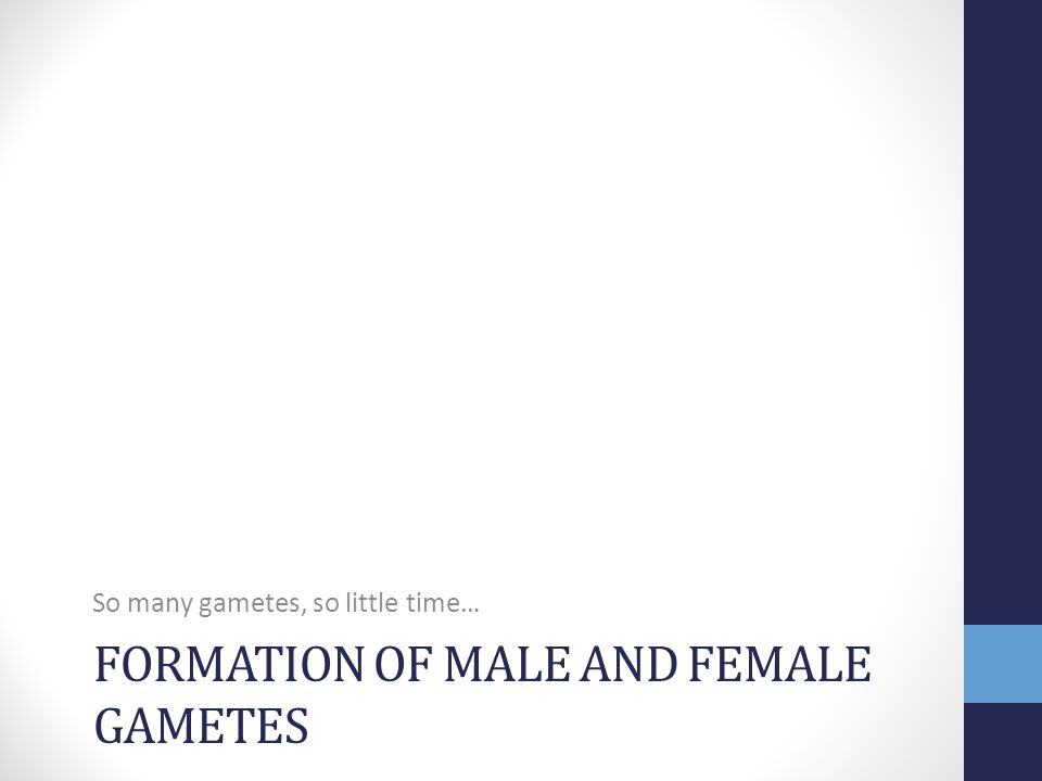 Formation of male and female gametes
