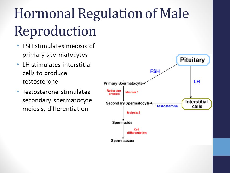 Hormonal Regulation of Male Reproduction