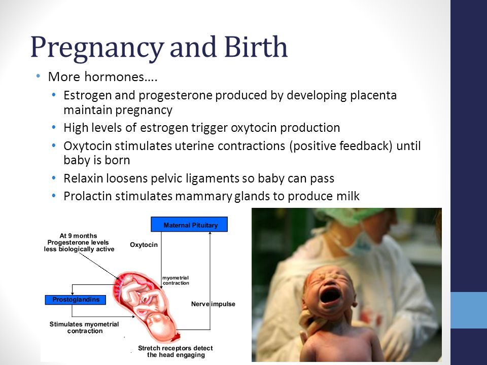 Pregnancy and Birth More hormones….