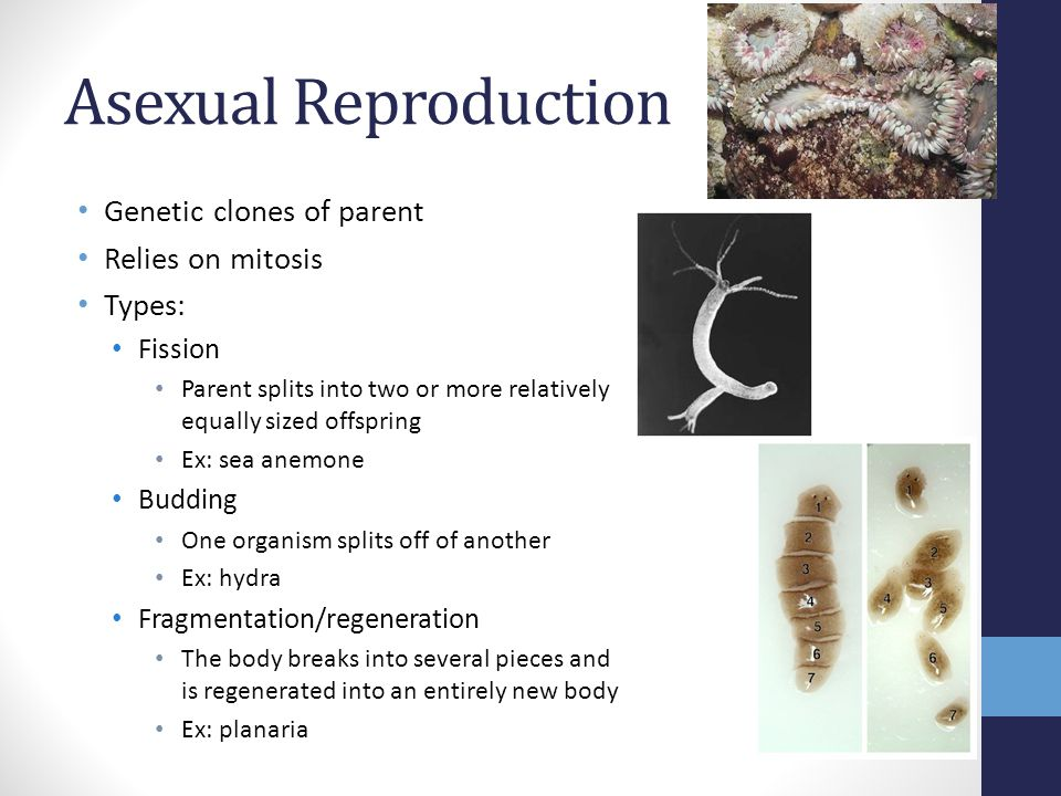 Asexual Reproduction Genetic clones of parent Relies on mitosis Types: