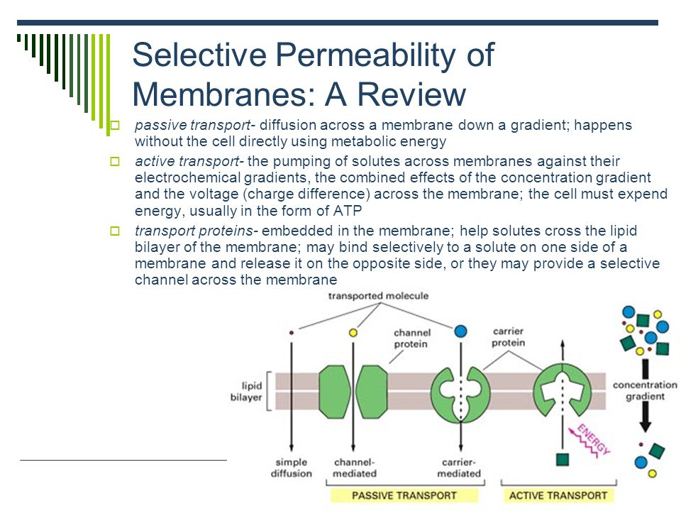 Selective Permeability of Membranes: A Review