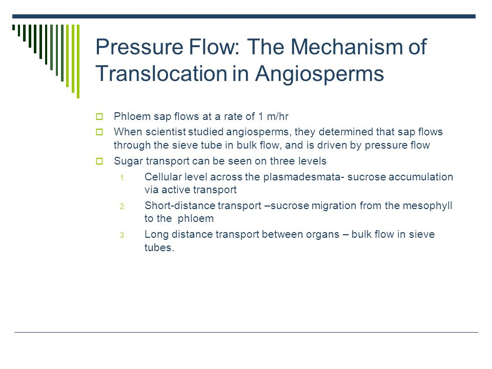 Pressure Flow: The Mechanism of Translocation in Angiosperms