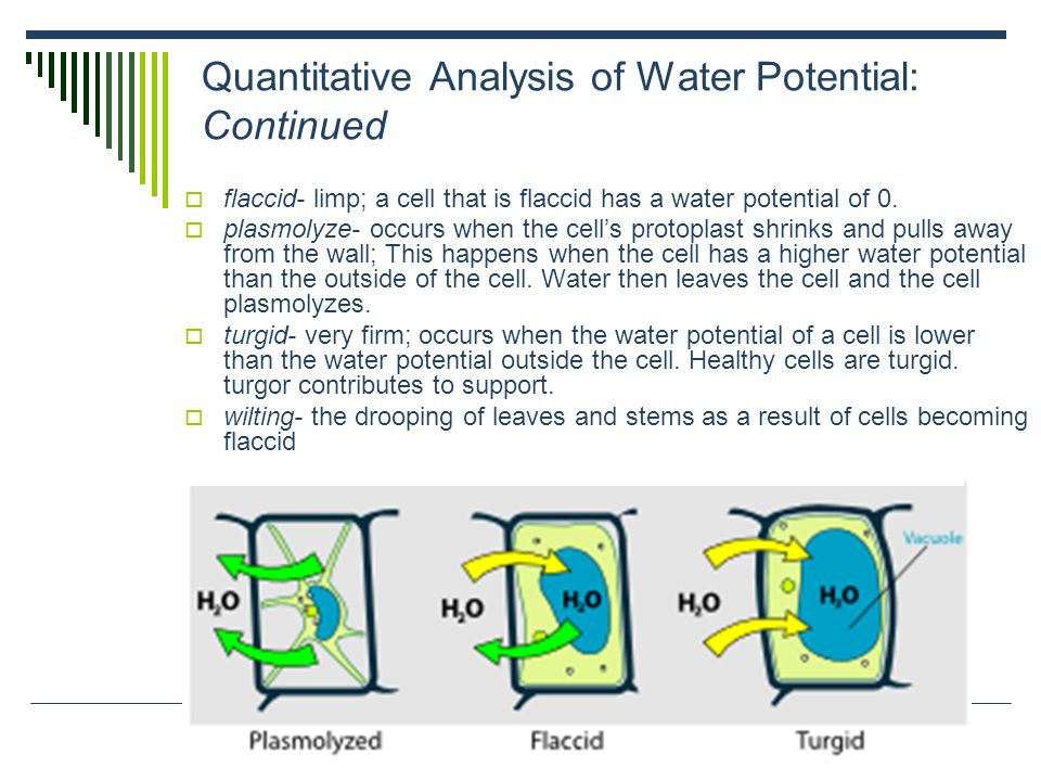 Quantitative Analysis of Water Potential: Continued