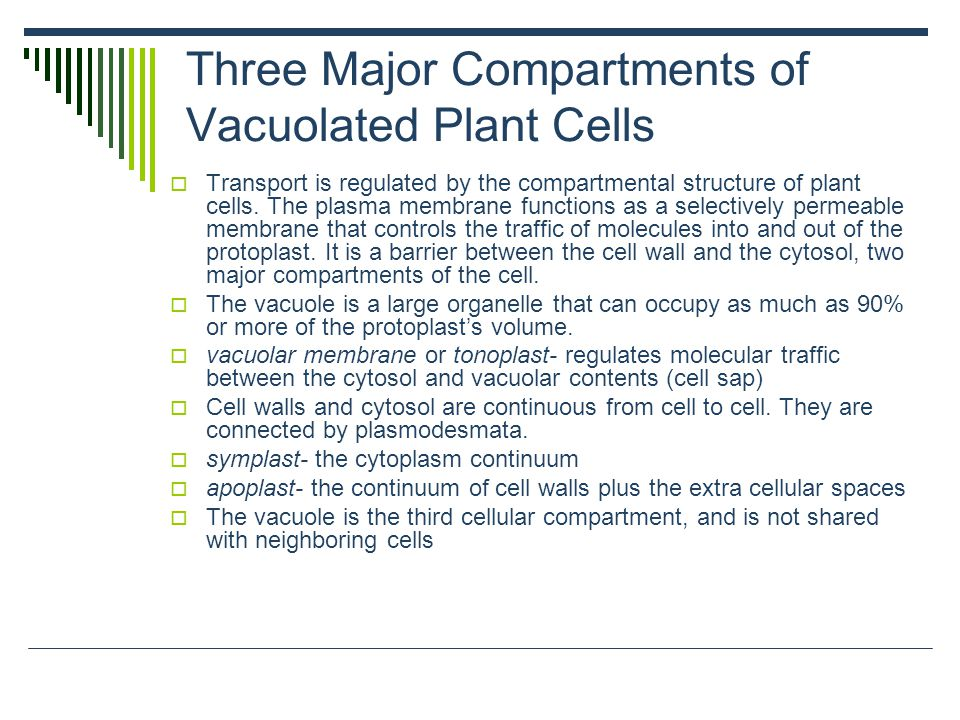 Three Major Compartments of Vacuolated Plant Cells