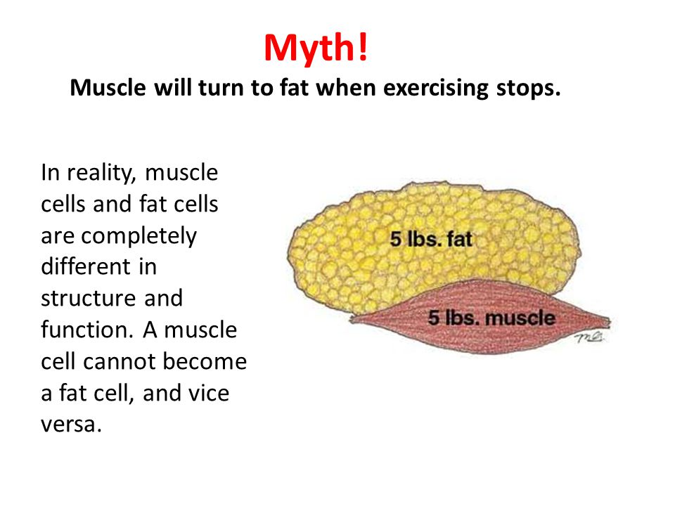 Myth! Muscle will turn to fat when exercising stops.