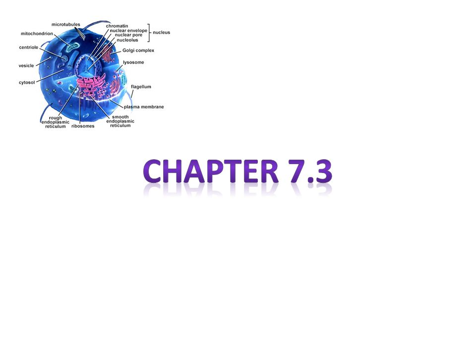 Chapter 7.3