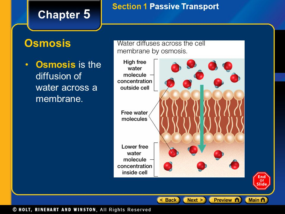 Chapter 5 Osmosis Osmosis is the diffusion of water across a membrane.