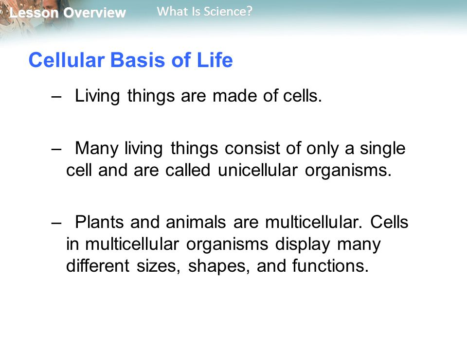 Cellular Basis of Life Living things are made of cells.