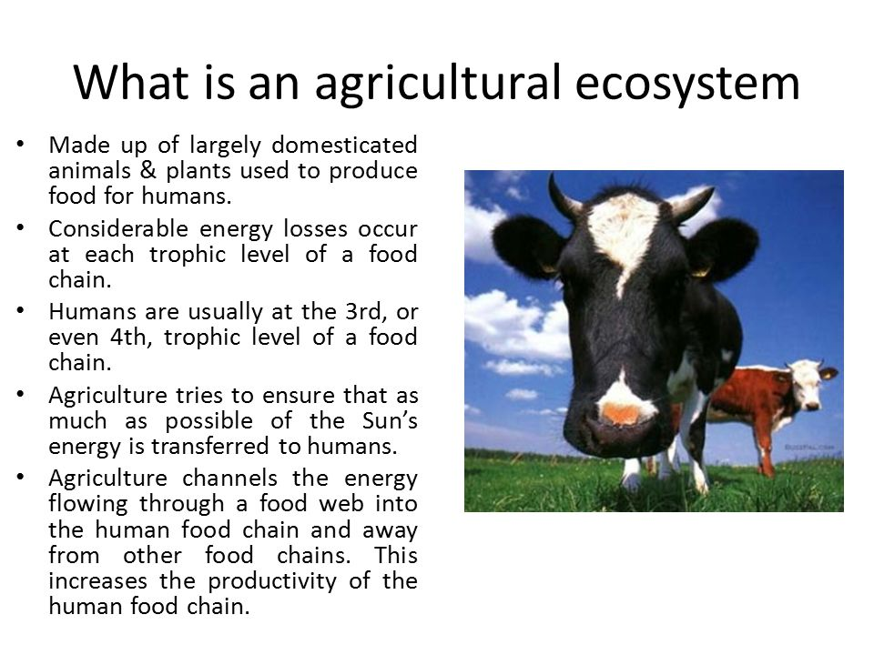 What is an agricultural ecosystem