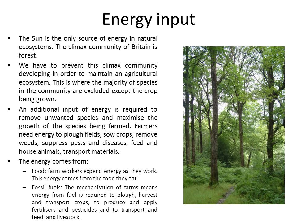 Energy input The Sun is the only source of energy in natural ecosystems. The climax community of Britain is forest.