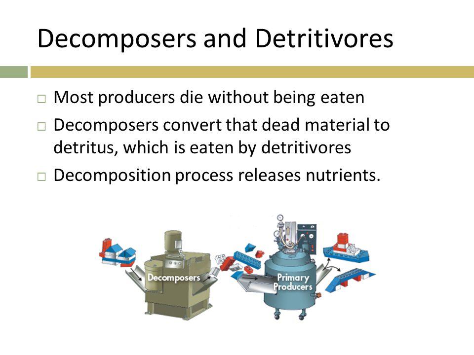 Decomposers and Detritivores