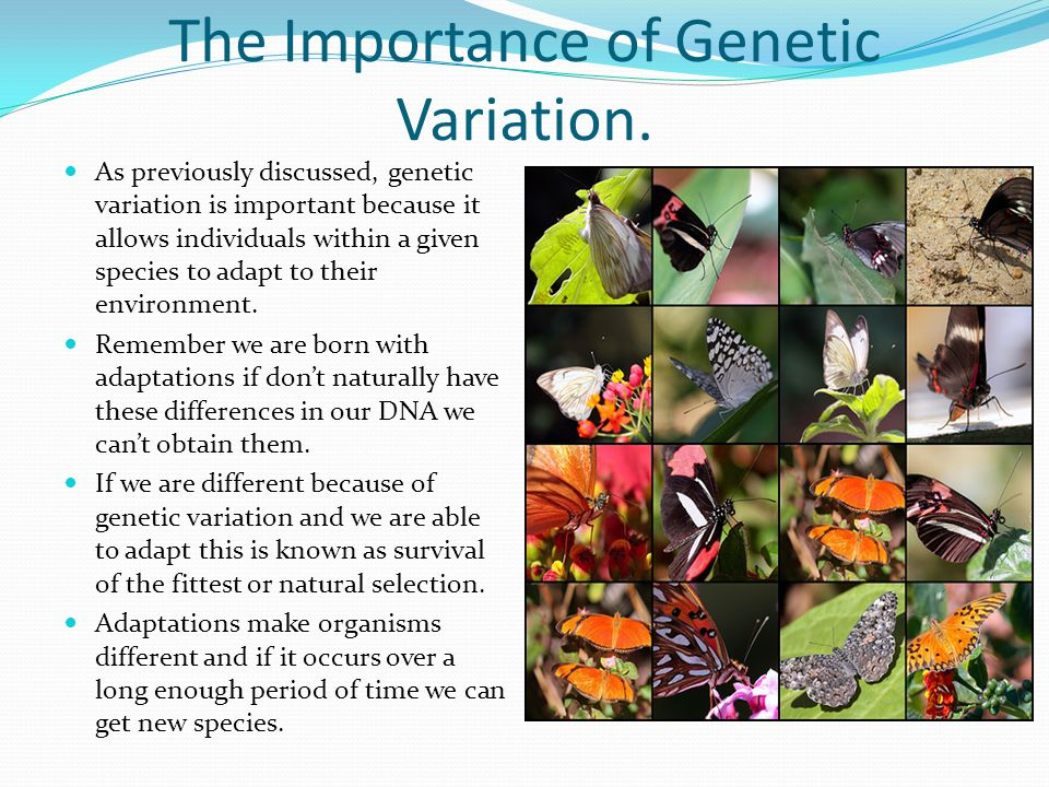 The Importance of Genetic Variation.