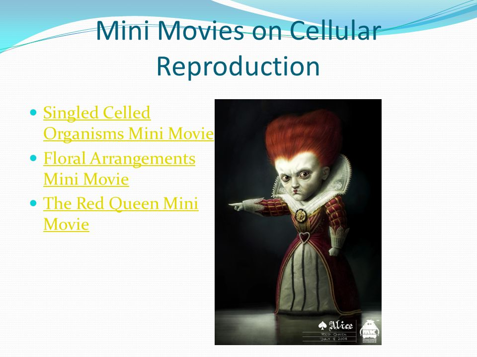 Mini Movies on Cellular Reproduction