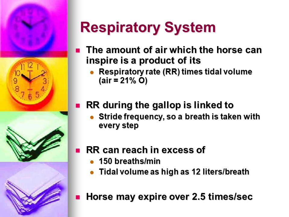 Respiratory System The amount of air which the horse can inspire is a product of its.