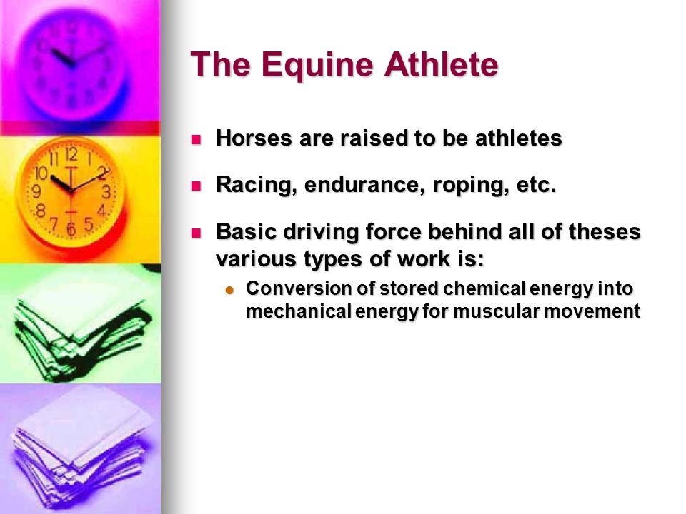 The Equine Athlete Horses are raised to be athletes